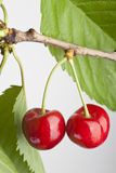 Pair of cherries Royalty Free Stock Photography