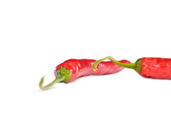 Pair of chilis. A pair of chilis on white ground Royalty Free Stock Photography