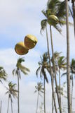 A pair of Coconuts on air Royalty Free Stock Images
