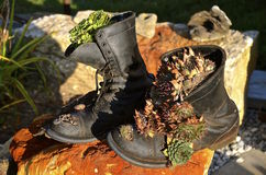 Pair of combat Army boots decorated with pine cones Royalty Free Stock Image