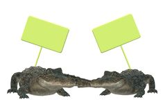 A pair of crocodiles with empty luminous green signs. A computer generated illustration image of a pair of crocodiles with empty luminous green signs above them stock illustration