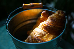 Pair of croissants in a tin bucket lit by strong morning sun  li Stock Image