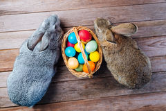 Pair of cute Easter rabbits Stock Photos