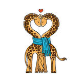 A pair of cute giraffes in love with a common scarf. Neck curved in the shape of heart. Stock Photo