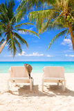 Pair of deck chairs between coconut palms on a tropical beach Royalty Free Stock Image