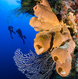 A pair of divers on a deep, colorful coral reef. SCUBA divers exploring a deep, vertical coral wall Stock Image