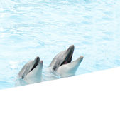Pair of dolphins Stock Photos