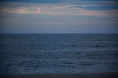 Pair of Dolphins in Ocean Royalty Free Stock Photos
