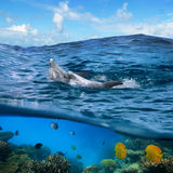 Pair of dolphins swimming on wave. Underwater photo splitted two parts Two happy playful dolphins swimming its back under cloudy blue sky and under them there is stock photos
