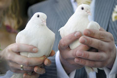 Pair of doves Stock Photos