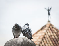 A pair of doves on the ball in Girona Stock Image