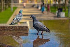 Pair of doves on the fountain,love, hope, beauty, some good news. Pair of doves on the fountain,love, hope, beauty, good news royalty free stock images