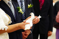 Pair of doves in new family hands Royalty Free Stock Photography