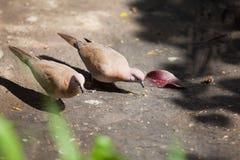 A pair of doves. Pair doves peace peaceful symbol symbolism bird feather birds beaks pigeon stock photos