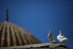 Pair of doves on wall Stock Images