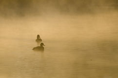 Pair of Ducks Silhouetted in the Silent Morning Mist. Pair of Ducks Silhouetted in the Peace and Silence of the Morning Mist Stock Image