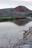 Pair of Ducks swimming in the Bighorn River near Thermopolis Wyoming Stock Photography