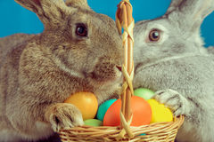 Pair of Easter bunny Royalty Free Stock Photography