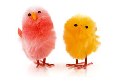 A pair of easter chicken Royalty Free Stock Photography