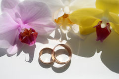 Pair of elegant wedding rings Royalty Free Stock Image