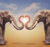 A pair of elephants arrange trumpets in the shape of a heart.  C. Oncept for greeting card, poster, cover, and more Royalty Free Stock Photos