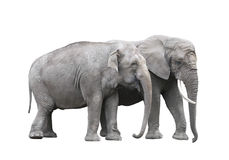 Pair of elephants stock photo