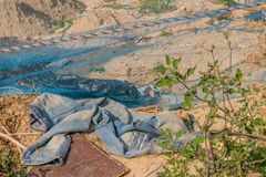 Pair of faded bluejeans laying in dirt. On ground near blue nylon mesh with green plant in foreground stock photography