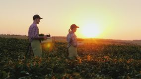 A pair of farmers carry boxes of vegetables across the field. Harvesting on a family farm stock footage