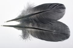 Pair of feathers Stock Photos