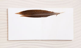 Pair of feathers on a white beige empty background or frame. Ide Royalty Free Stock Photo