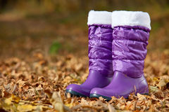 Pair of female boots in autumn foliage stock image
