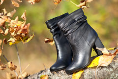 Pair of female boots in autumn park stock images