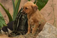 A pair of feral puppies Royalty Free Stock Images