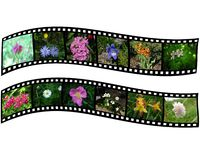 Pair of films with images of flowers Stock Photo