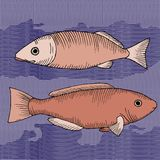 Pair of fishes Stock Image