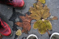 Pair of foot shoes on a background asphalt and leaves Stock Photos
