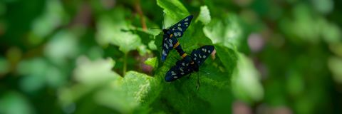 Pair of forest butterflies are sitting on the green foliage of the shrub. Web banner for your design stock photo