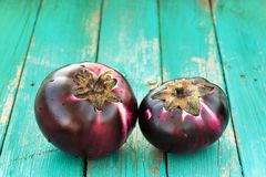 Pair of fresh heirloom organic violet eggplants on turquoise bac Royalty Free Stock Images