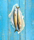 A pair of fresh mackerels. Royalty Free Stock Photos