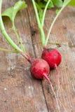 Pair of fresh radishes. Pair red fresh radishes on wood table Stock Photo