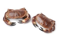 Pair of fresh raw edible sea crabs. Isolated on white background Royalty Free Stock Photos