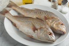 Pair of fresh raw koebi fish. On a dish Stock Photography