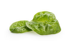 Pair of fresh spinach leaves Royalty Free Stock Images