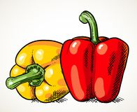 Two sweet peppers vegetable illustration. Pair of fresh sweet peppers isolated. Vegetable design element for farm market, vegetarian food recipe. Vector Royalty Free Stock Images