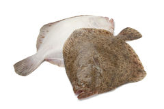 Pair of fresh Turbot fishes Royalty Free Stock Photos