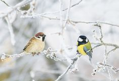Pair of funny curious little bird tit and Sparrow sit among the