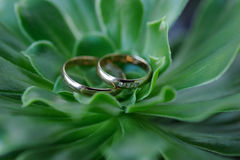 Pair of gold wedding rings on background of green herb Royalty Free Stock Photos