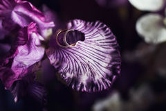 Pair of gold wedding rings on a petal beautiful purple orchids, Royalty Free Stock Photos