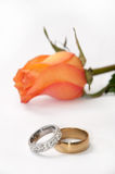 Pair of golden rings in focus with orange rose in background Royalty Free Stock Image