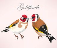 Pair of goldfinches Royalty Free Stock Photo
